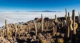Isla del Pescado, Salar de Uyuni, Bolivia, 2016-02-04, DD 42.JPG