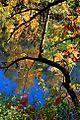 Jackson Bottom Wetlands (Washington County, Oregon scenic images) (washDA00028).jpg