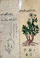 Japanese Herbal, 17th century Wellcome L0030085.jpg