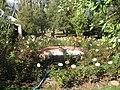 Jardín de Rosas.jpg