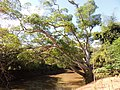 Jardim das Aroeiras, Goiânia - GO, Brazil - panoramio (2).jpg