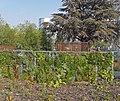 Jardin des Géants à Lille - Murs végétalisés - panoramio (3).jpg