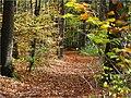 Jesenný Grófov les - panoramio.jpg