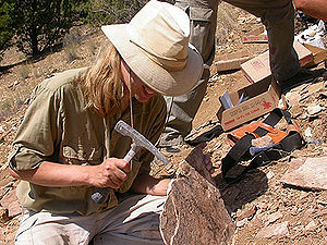 English: Paleontologist Matt Smith at work, Jo...