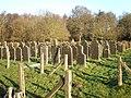 Joodse Begraafplaats Muiderberg Graeber6.JPG