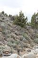 Jumbo Grade Trail - panoramio (65).jpg