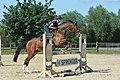 Jumping-exercise-horse.jpg