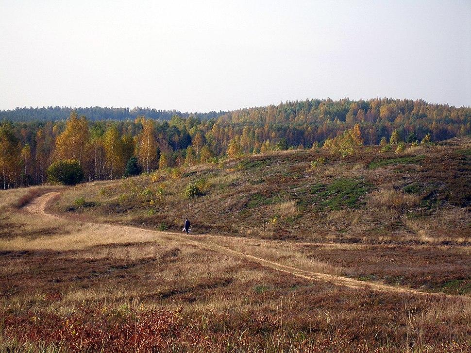 Jussi heath in autumn
