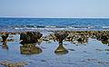 Kızkalesi - Korykos 05.jpg
