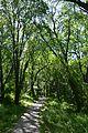 Kahovka Arboretum 15 (YDS 1307).jpg