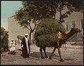 Kairo, fellahs transportant des fourrages à la ville LCCN2017657442.jpg