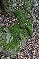 Kattoudhia-Mylikouri Nature Trail - panoramio (7).jpg