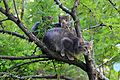Katze mit Kätzchen... Koшка с котятами...IMG 5777WI.jpg