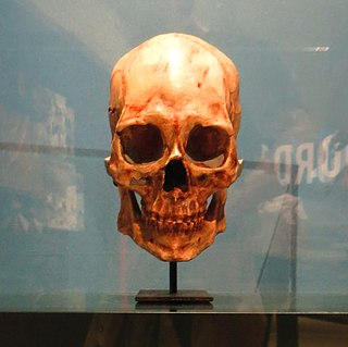 Kennewick Man skeletal remains of a prehistoric Paleoamerican man found on a bank of the Columbia River in Kennewick, Wash., US in 1996