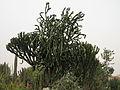 Kibbutz Sa'ad (479019091).jpg
