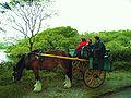 Killarneycart.jpg