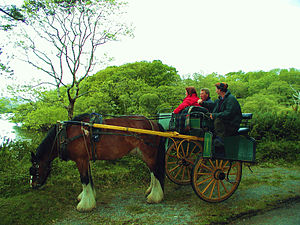 Killarney - Tourists near Ross Castle