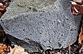 Kimberlite (Gates-Adah Kimberlite Dike, Early Jurassic; Fayette County, Pennsylvania, USA) 5 (48353982237).jpg
