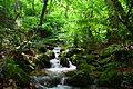 Koleshinski vodopad 16.JPG