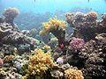Korallenriff-Awlad Baraka.jpg