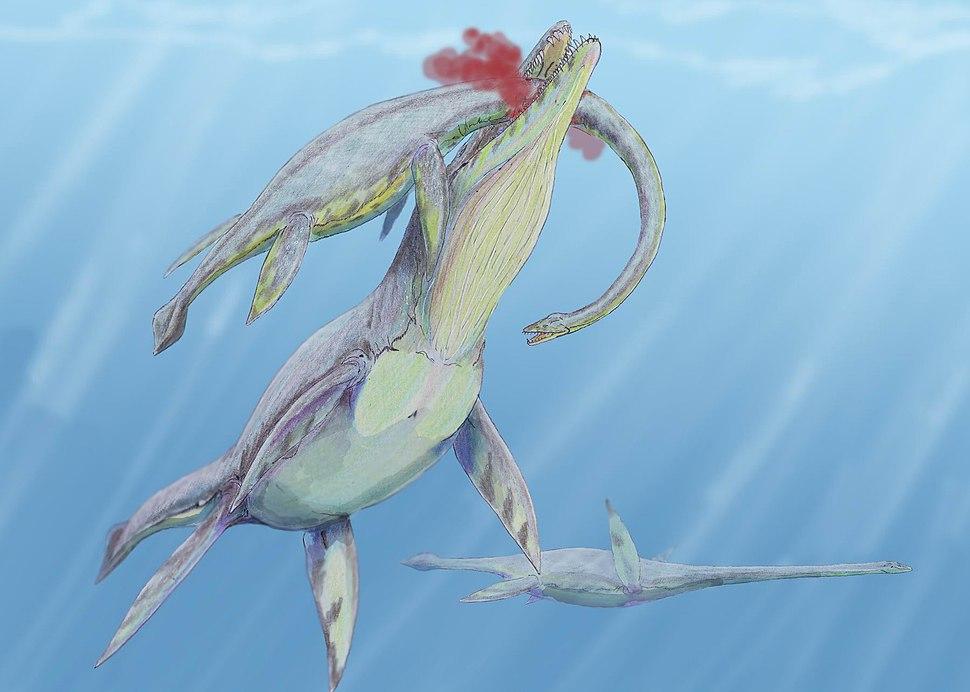 drawing of big plesiosaurus biting into Kronosaurus