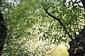 Kurcaparti tanösvény Mindszent - panoramio (7).jpg