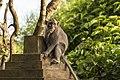 Kuta Bali Indonesia Pura-Luhur-Uluwatu-Monkeys-01.jpg