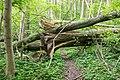 Lage - 2015-05-17 - LIP-084 Grutt- und Sunderbach (64).jpg