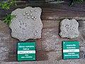 Le centre du parc national de Etsaut à mis en place un parcourt permetant de reconaitre les traces des animaux avec un affichage en braille à Etsaut vue 4.jpg