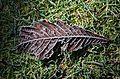 Leaf (6703345289).jpg