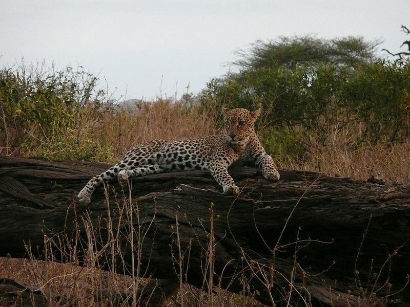 Vé máy bay giá rẻ đi Mara Samburu Kenya