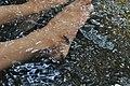 Lepidocephalichthys thermalis.jpg