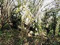 Les Écuries des Carneaux, Prinvaux, Boigneville - chaos rocheux 17.jpg