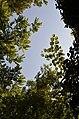 Light on Leaves.jpg