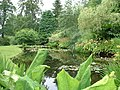 Lily pond at Attadale House - geograph.org.uk - 206433.jpg