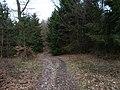 Limes-Path near Saalburg.jpg