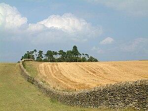 Bredon Hill - Oolitic limestone stone wall on Bredon Hill, separating grassland summit area from a wheat field