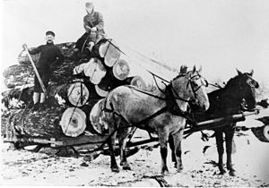Crook County, Oregon - Logging in the Ochoco Mountains, circa 1900