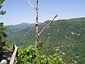 Lone Tree - panoramio (2).jpg