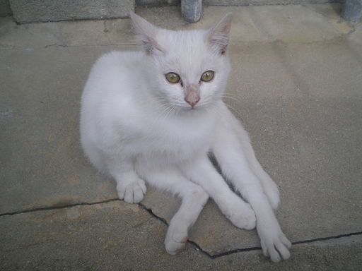 Loosely sitting stray white cat