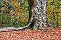 Münster, Park Sentmaring, Naturdenkmal -- 2017 -- 3273-9.jpg