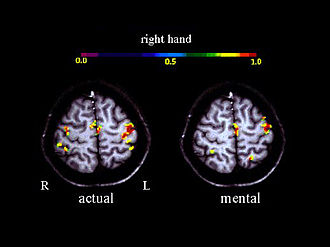 Motor imagery - Activation in the motor cortex during motor imagery amounts about 30 % of the level observed during actual performance; Roth et al., 1996.