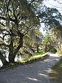 Magnolia Plantation and Gardens - Charleston, South Carolina (8556513094).jpg