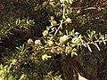Magnoliophyta sp. (41667870774).jpg