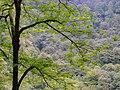 Mahmudabad, Mazandaran جنگل های شمال- محمود آباد.jpg