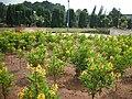 Malampuzha Gardens - panoramio (7).jpg