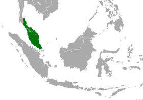 Malayan Pygmy Shrew area.png