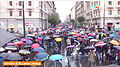 ManifestazioneStopBiocidio-Timing7s-2013-11-16.jpg