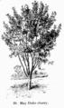 Manual of Gardening fig036.png
