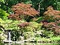 Maples in Winter Gardens - geograph.org.uk - 450077.jpg